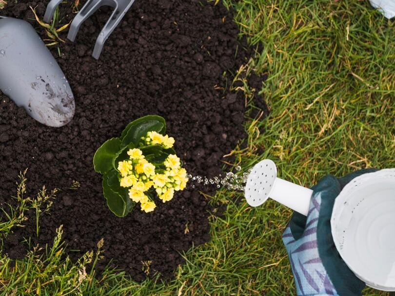 Cuidados com as plantas no outono